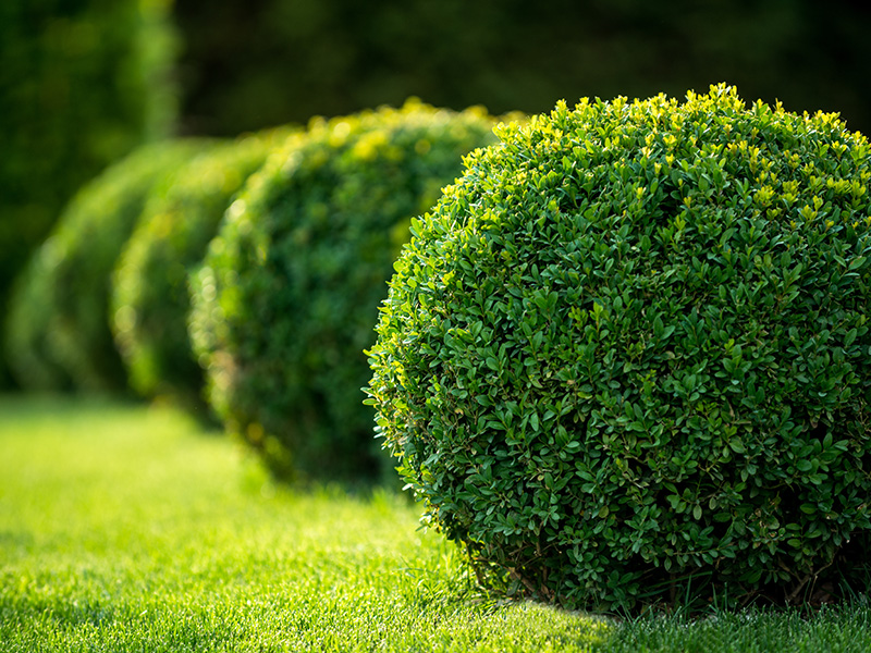 How to Keep Your Lawn Green in Summer Heat